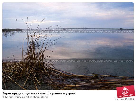 Берег пруда с пучком камыша ранним утром, фото № 251403, снято 11 апреля 2008 г. (c) Борис Панасюк / Фотобанк Лори