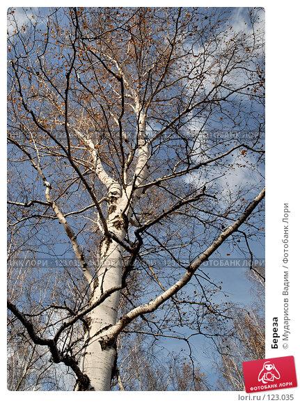 Купить «Береза», фото № 123035, снято 21 октября 2007 г. (c) Мударисов Вадим / Фотобанк Лори