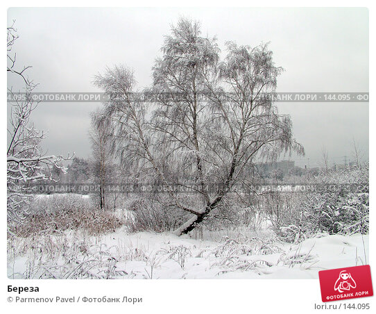 Купить «Береза», фото № 144095, снято 15 февраля 2007 г. (c) Parmenov Pavel / Фотобанк Лори