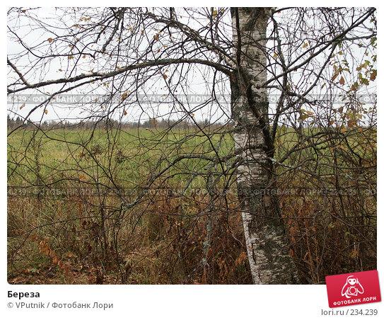Береза, фото № 234239, снято 7 октября 2005 г. (c) VPutnik / Фотобанк Лори