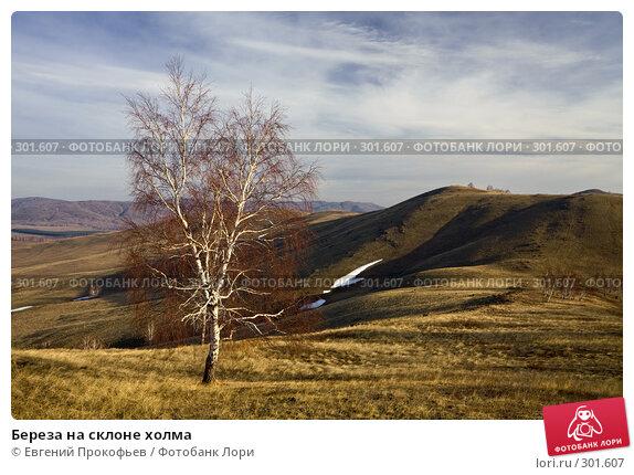Береза на склоне холма, фото № 301607, снято 20 апреля 2008 г. (c) Евгений Прокофьев / Фотобанк Лори