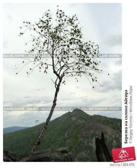 Купить «Березка на склоне Айгира», фото № 303475, снято 14 сентября 2007 г. (c) Sergey Toronto / Фотобанк Лори