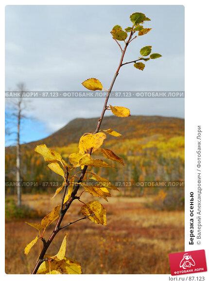 Березка осенью, фото № 87123, снято 20 сентября 2007 г. (c) Валерий Александрович / Фотобанк Лори