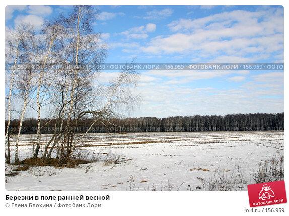 Березки в поле ранней весной, фото № 156959, снято 16 марта 2007 г. (c) Елена Блохина / Фотобанк Лори