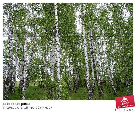 Березовая роща, фото № 12851, снято 23 мая 2004 г. (c) Удодов Алексей / Фотобанк Лори