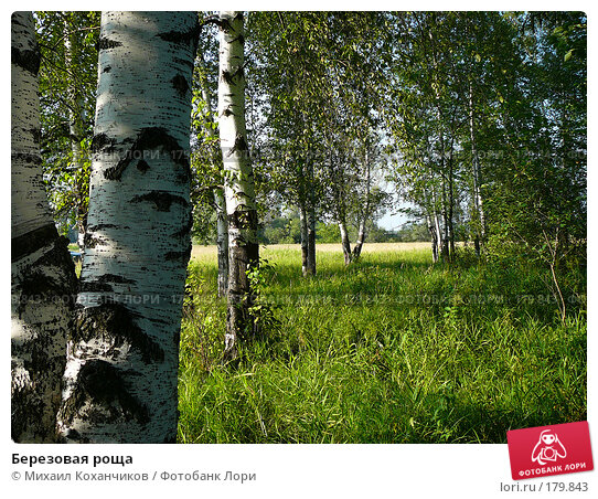 Березовая роща, фото № 179843, снято 6 августа 2007 г. (c) Михаил Коханчиков / Фотобанк Лори