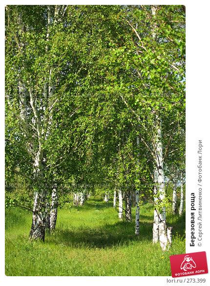 Березовая роща, фото № 273399, снято 5 мая 2008 г. (c) Сергей Литвиненко / Фотобанк Лори