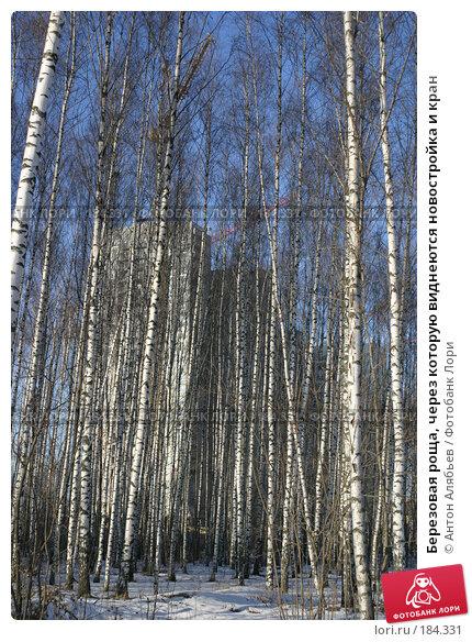 Березовая роща, через которую виднеются новостройка и кран, фото № 184331, снято 15 января 2008 г. (c) Антон Алябьев / Фотобанк Лори