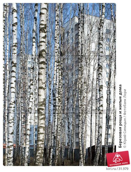 Березовая роща и жилые дома, фото № 31979, снято 30 марта 2007 г. (c) Юрий Синицын / Фотобанк Лори