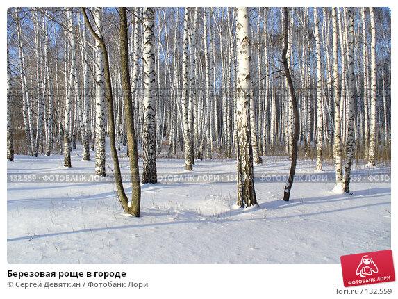 Купить «Березовая роще в городе», фото № 132559, снято 25 ноября 2007 г. (c) Сергей Девяткин / Фотобанк Лори