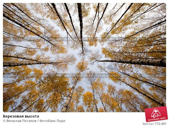 Купить «Березовая высота», фото № 172491, снято 19 октября 2007 г. (c) Вячеслав Потапов / Фотобанк Лори