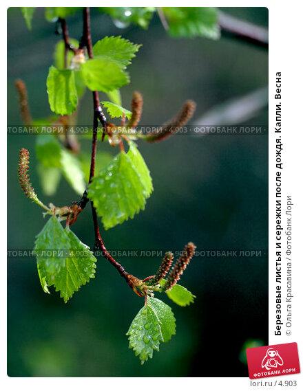 березовые листья от паразитов