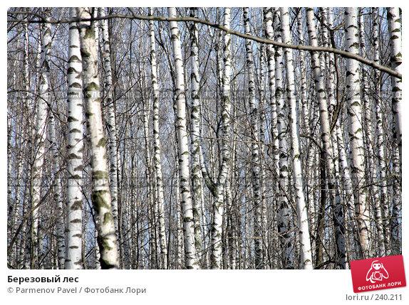 Березовый лес, фото № 240211, снято 30 марта 2008 г. (c) Parmenov Pavel / Фотобанк Лори