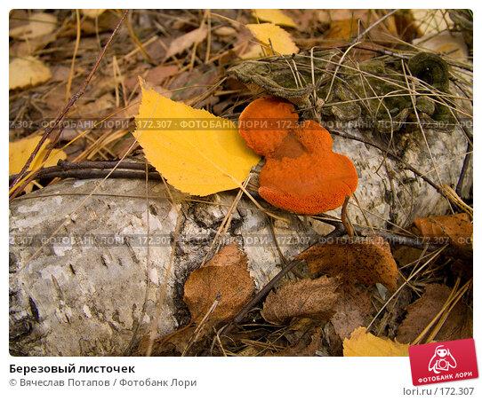 Березовый листочек, фото № 172307, снято 20 октября 2007 г. (c) Вячеслав Потапов / Фотобанк Лори