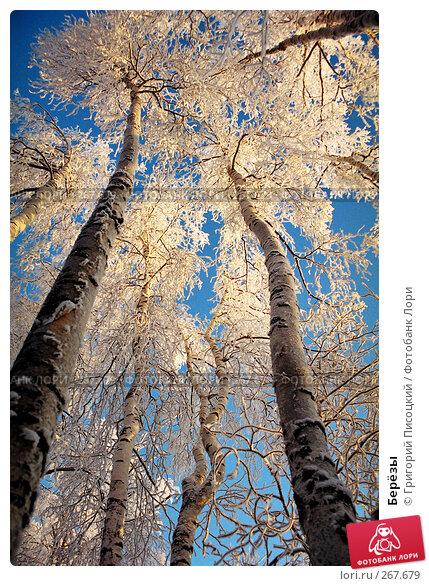 Берёзы, фото № 267679, снято 23 января 2017 г. (c) Григорий Писоцкий / Фотобанк Лори