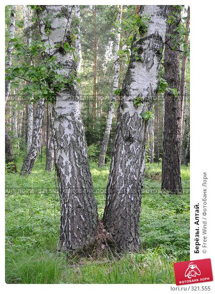 Купить «Берёзы. Алтай.», эксклюзивное фото № 321555, снято 8 июня 2008 г. (c) Free Wind / Фотобанк Лори
