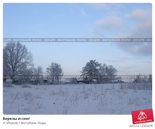 Березы и снег, фото № 233679, снято 16 января 2017 г. (c) VPutnik / Фотобанк Лори