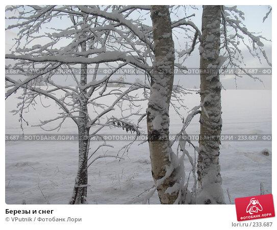 Березы и снег, фото № 233687, снято 28 февраля 2017 г. (c) VPutnik / Фотобанк Лори