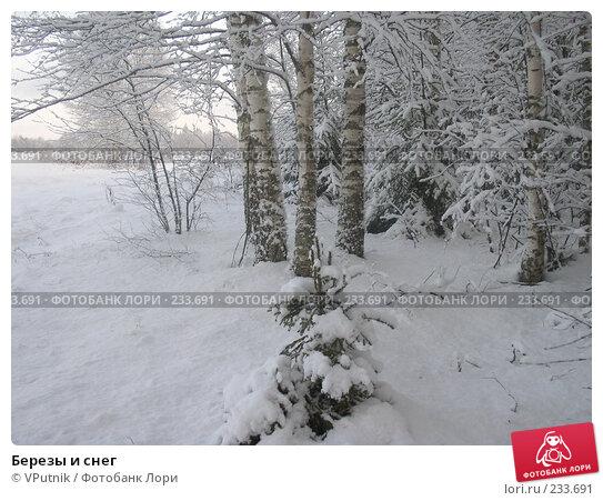 Березы и снег, фото № 233691, снято 28 апреля 2017 г. (c) VPutnik / Фотобанк Лори