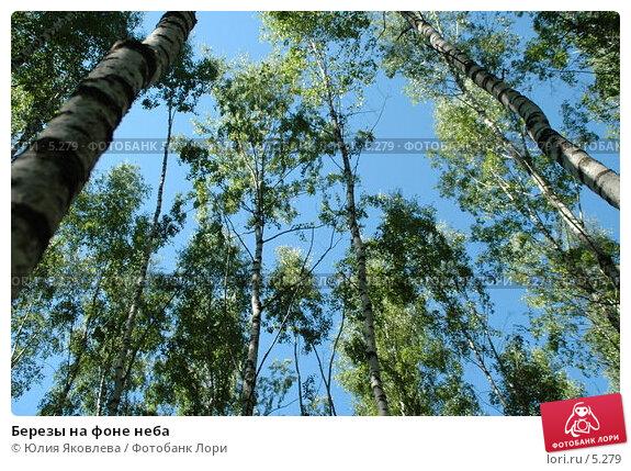 Купить «Березы на фоне неба», фото № 5279, снято 6 июля 2006 г. (c) Юлия Яковлева / Фотобанк Лори