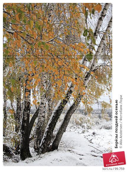 Купить «Берёзы поздней осенью», фото № 99759, снято 16 октября 2007 г. (c) Alla Andersen / Фотобанк Лори