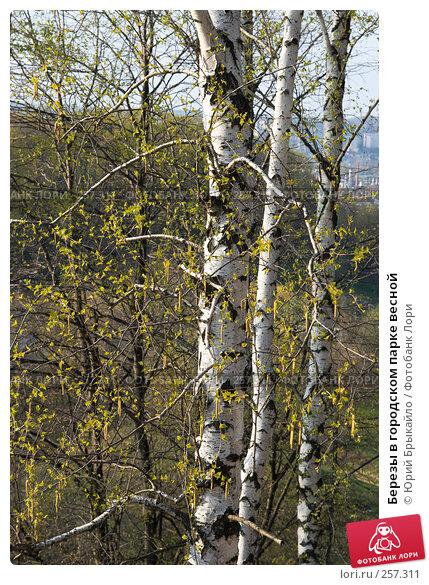 Березы в городском парке весной, фото № 257311, снято 14 апреля 2008 г. (c) Юрий Брыкайло / Фотобанк Лори