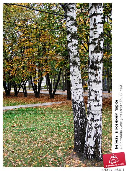 Березы в осеннем парке, фото № 146811, снято 5 октября 2007 г. (c) Светлана Силецкая / Фотобанк Лори