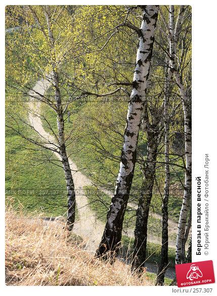 Березы в парке весной, фото № 257307, снято 14 апреля 2008 г. (c) Юрий Брыкайло / Фотобанк Лори