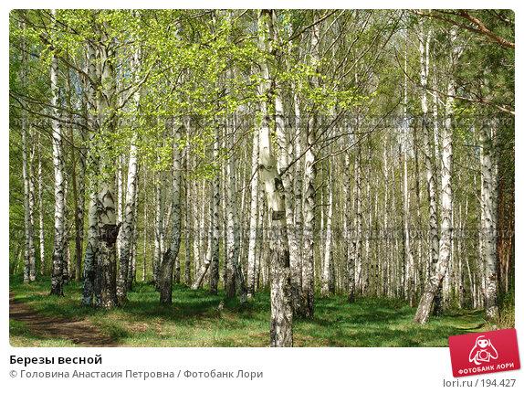 Березы весной, фото № 194427, снято 7 мая 2007 г. (c) Головина Анастасия Петровна / Фотобанк Лори