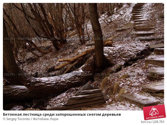 Бетонная лестница среди запорошенных снегом деревьев, фото № 235751, снято 30 декабря 2007 г. (c) Sergey Toronto / Фотобанк Лори