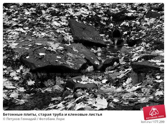Бетонные плиты, старая труба и кленовые листья, фото № 177299, снято 27 октября 2007 г. (c) Петухов Геннадий / Фотобанк Лори