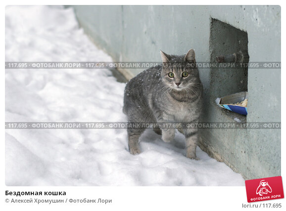 Купить «Бездомная кошка», фото № 117695, снято 6 февраля 2007 г. (c) Алексей Хромушин / Фотобанк Лори