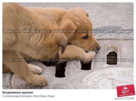 Купить «Бездомные щенки», эксклюзивное фото № 173919, снято 23 мая 2006 г. (c) Александр Алексеев / Фотобанк Лори