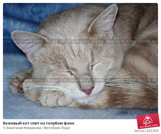 Бежевый кот спит на голубом фоне, фото № 212519, снято 21 июля 2007 г. (c) Анастасия Некрасова / Фотобанк Лори