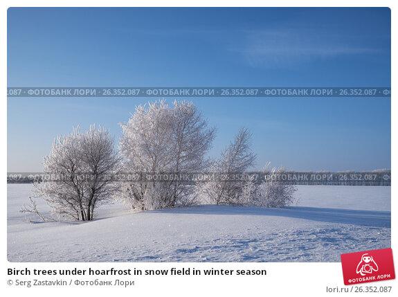 Купить «Birch trees under hoarfrost in snow field in winter season», фото № 26352087, снято 18 января 2017 г. (c) Serg Zastavkin / Фотобанк Лори