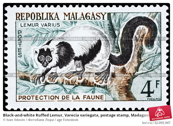 Black-and-white Ruffed Lemur, Varecia variegata, postage stamp, Madagascar, Malagasy, 1961. (2013 год). Редакционное фото, фотограф Ivan Vdovin / age Fotostock / Фотобанк Лори