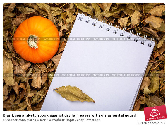 Blank spiral sketchbook against dry fall leaves with ornamental gourd. Стоковое фото, фотограф Zoonar.com/Marek Uliasz / easy Fotostock / Фотобанк Лори