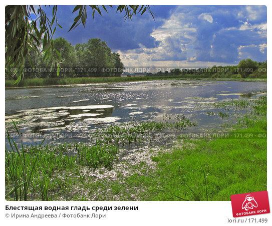 Блестящая водная гладь среди зелени, фото № 171499, снято 27 августа 2006 г. (c) Ирина Андреева / Фотобанк Лори