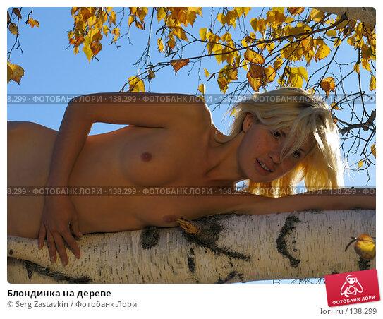 Блондинка на дереве, фото № 138299, снято 18 сентября 2005 г. (c) Serg Zastavkin / Фотобанк Лори