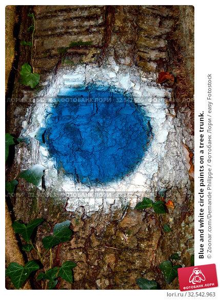 Купить «Blue and white circle paints on a tree trunk.», фото № 32542963, снято 9 декабря 2019 г. (c) easy Fotostock / Фотобанк Лори