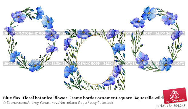 Blue flax. Floral botanical flower. Frame border ornament square. Aquarelle wildflower for background, texture, wrapper pattern, frame or border. Стоковое фото, фотограф Zoonar.com/Andrey Yanushkov / easy Fotostock / Фотобанк Лори