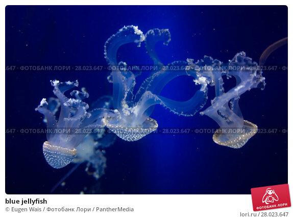 Купить «blue jellyfish», фото № 28023647, снято 23 июня 2019 г. (c) PantherMedia / Фотобанк Лори