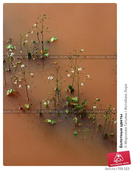 Купить «Болотные цветы», фото № 159323, снято 23 июля 2005 г. (c) Морозова Татьяна / Фотобанк Лори