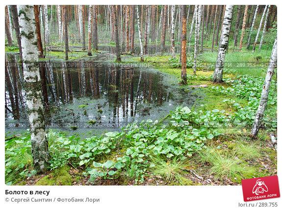 Болото в лесу, фото № 289755, снято 30 июня 2007 г. (c) Сергей Сынтин / Фотобанк Лори