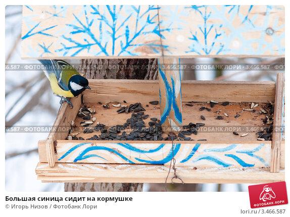 Купить «Большая синица сидит на кормушке», эксклюзивное фото № 3466587, снято 13 марта 2012 г. (c) Игорь Низов / Фотобанк Лори