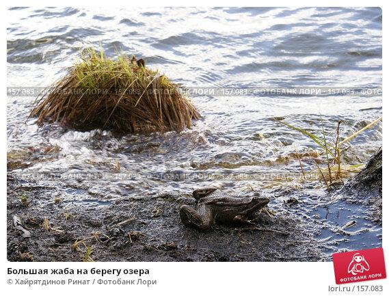 Большая жаба на берегу озера, фото № 157083, снято 11 мая 2007 г. (c) Хайрятдинов Ринат / Фотобанк Лори