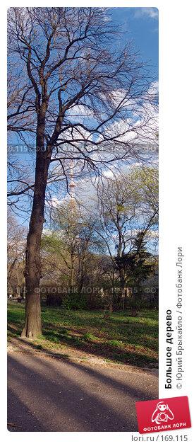 Большое дерево, фото № 169115, снято 23 марта 2017 г. (c) Юрий Брыкайло / Фотобанк Лори
