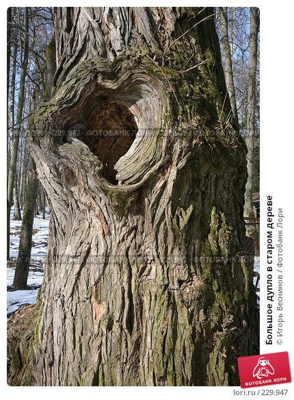 Большое дупло в старом дереве, фото № 229947, снято 22 марта 2008 г. (c) Игорь Веснинов / Фотобанк Лори