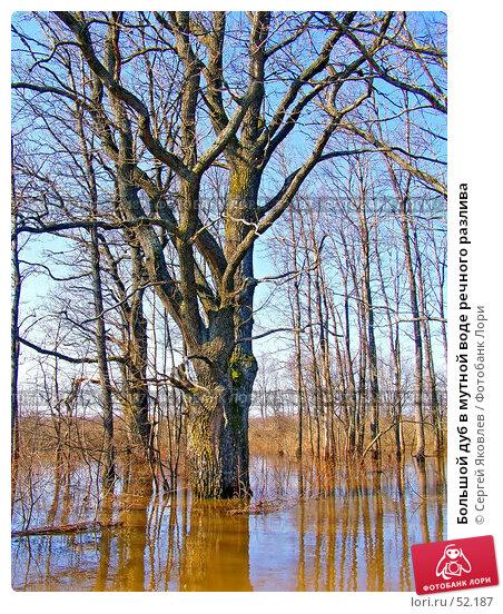 Большой дуб в мутной воде речного разлива, фото № 52187, снято 28 марта 2007 г. (c) Сергей Яковлев / Фотобанк Лори