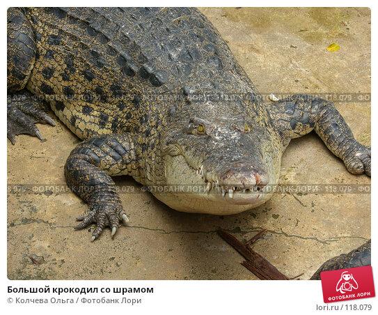 Большой крокодил со шрамом, фото № 118079, снято 25 марта 2007 г. (c) Колчева Ольга / Фотобанк Лори